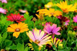 tips voor planten bloemen in voorjaar
